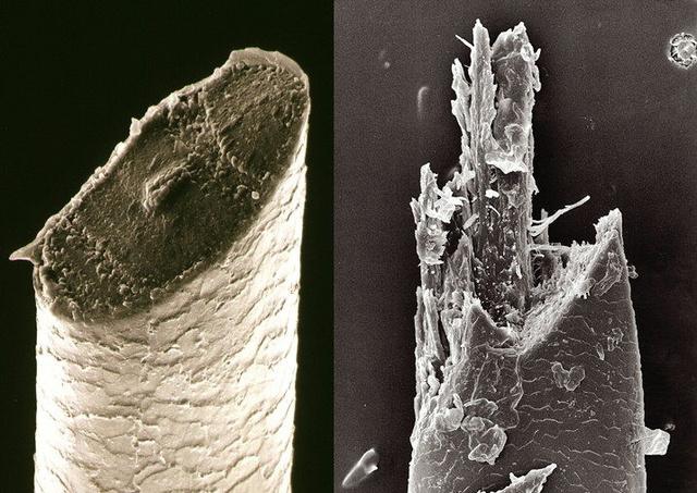 Baard onder microscoop