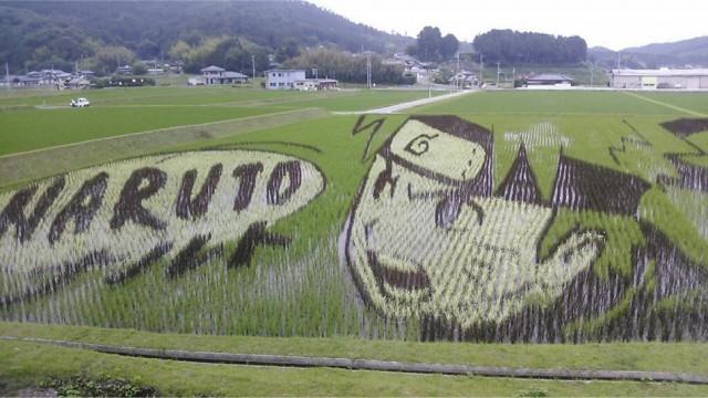 Naruto rijstveld kunst