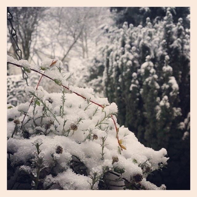 Sneeuw in Assen