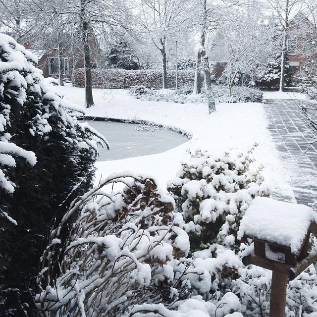 Vijver sneeuw