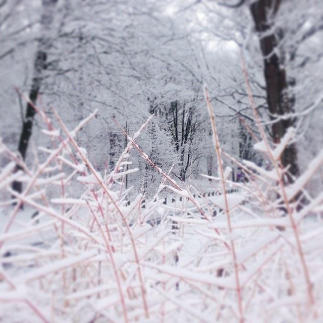 sneeuw in stadspark Groningen