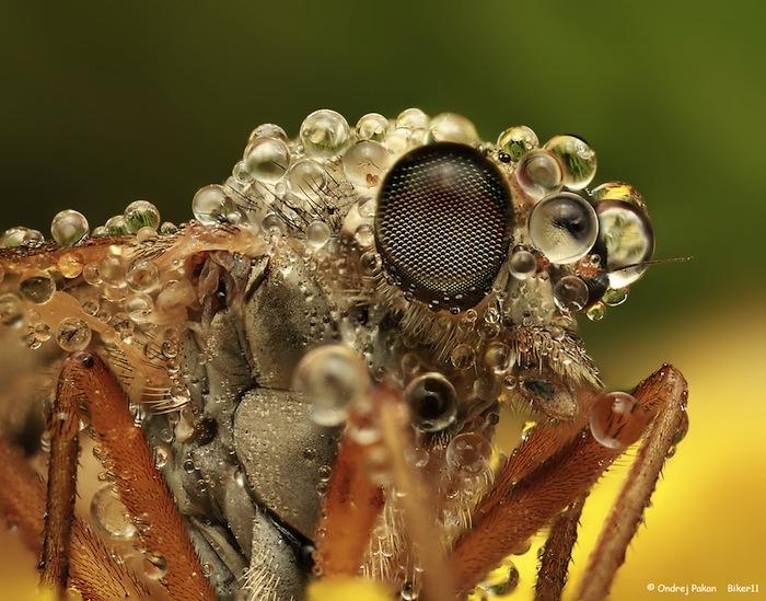 insecten en dauwdruppels