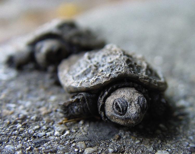 Baby schildpadden