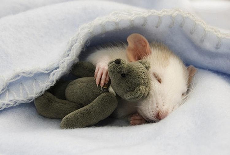 Babymuisje met knuffel